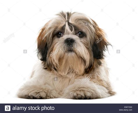 canine stockfotos canine bilder alamy