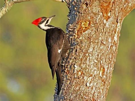 what do woodpeckers eat in summer and in winter