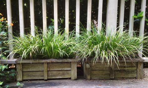 Garden Supply Cary by Gardening Tips For Curb Appeal Carycitizen