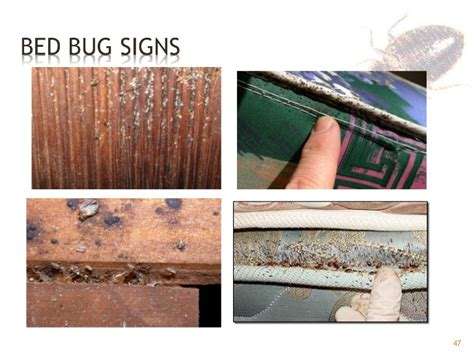 do bed bugs live in clothes bed bug eggs in clothes