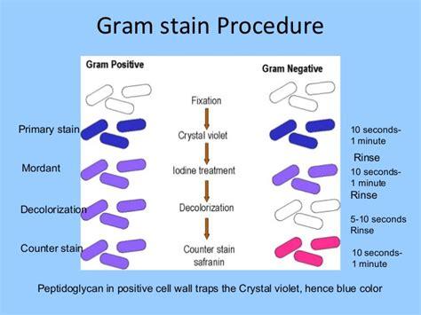 gram staining procedure in flowchart bacteriology