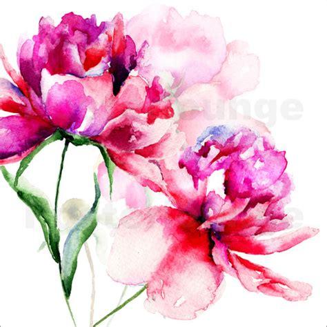 poster fiori beautiful peony flowers poster posterlounge