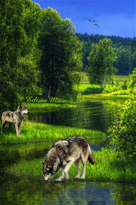 imagenes de animales con movimiento imagenes con movimiento y brillo taringa orijinal
