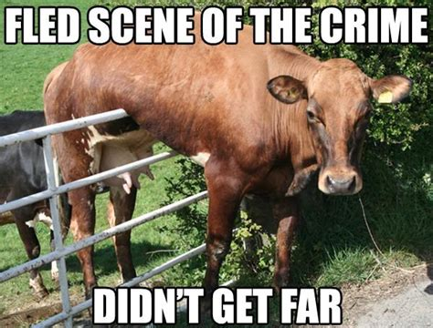 Cow Memes - 2012 memes where are they now pleated jeans