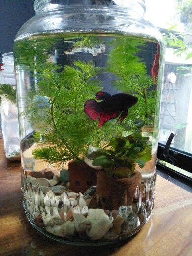 betta   gallons  place  hide temperatures