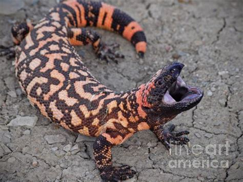 RAWR!!!(Gila)Monsters in the News! - Tucson Wildlife Center