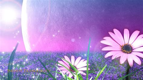 wallpaper flower view view all wallpapers flowers wallpapers