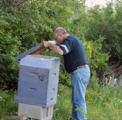 letters from the hive an intimate history of bees honey and humankind ebook return to bedlam farm part 6 the golden hour walk