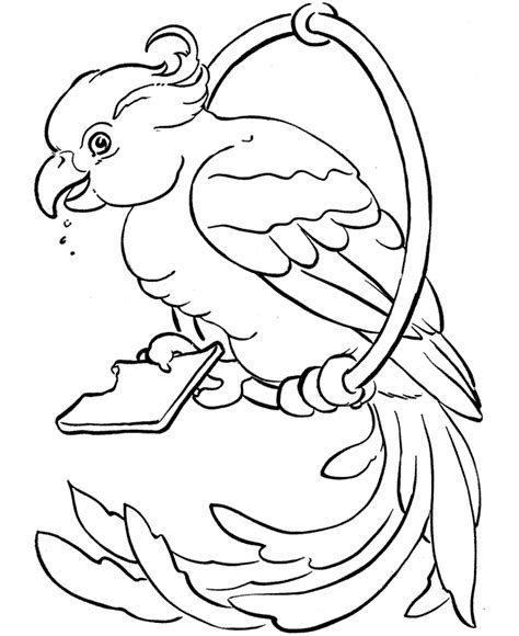 macaw bird coloring page free printable parrot coloring pages for kids