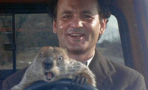 bill murray groundhog day xavier pests you may see this winter terminix pest