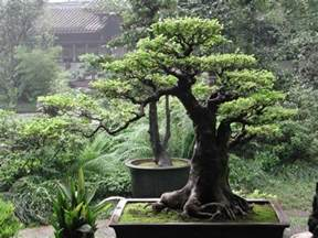 what do trees represent pin by shirley hufana on feng shui