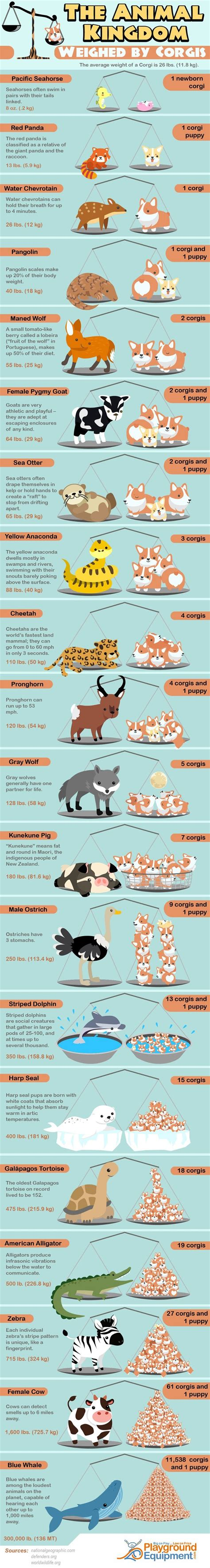 infographics animal kingdom 1848776543 the animal kingdom weighed by corgis infographic visualistan