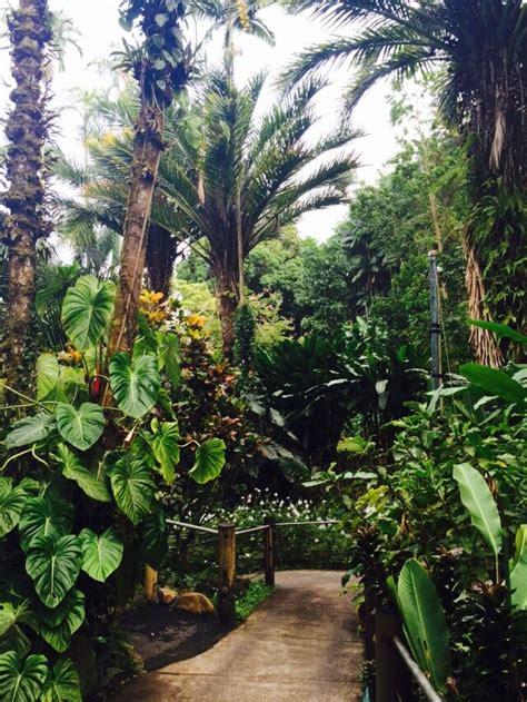 hawaii tropical botanical garden aloha journal 80 best hawaii images on pinterest destinations hawaii travel and aloha hawaii