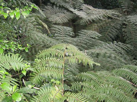 floor ls that look like trees n z ferns the trees flowers of whangarei