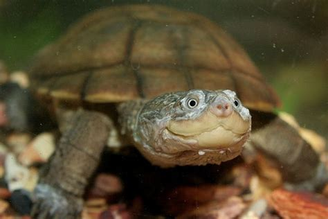 pin by rj rico suave on turtles terrapin and tortoise oh my pinter