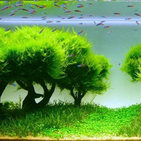 aquascape fish 24 best fresh water tank ideas images on pinterest