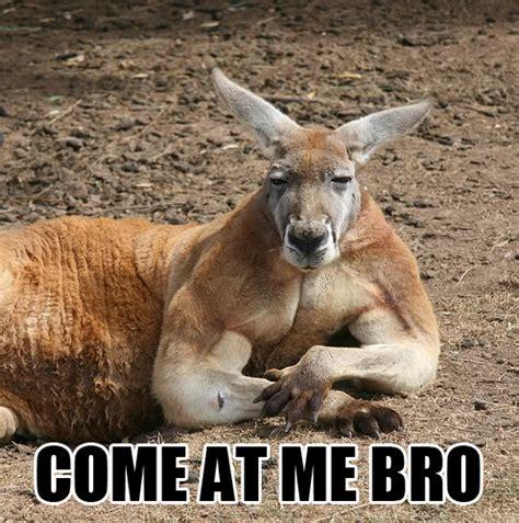Kangaroo Meme - redhotpogo come at me bro 4