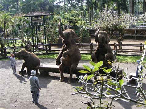 Voucher Tiket World Bali Anak jual voucher tiket bali safari marine park dewasa