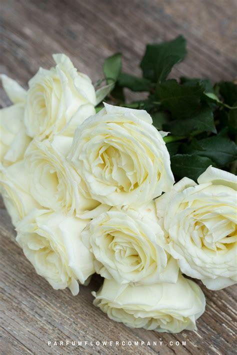 scented garden flowers premium scented garden vitality parfum flower company