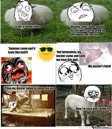 Sheep Memes