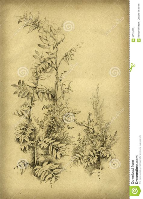 Handmade Drawing Paper - plant drawing stock illustration image 56519036
