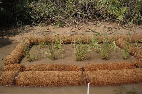 Coir Fiber Matting Erosion by Coir Logs What Are Coir Logs And Why They Are Showing
