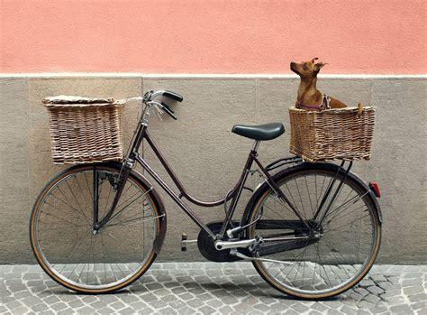 bike baskets for dogs what is the best bike basket to keep your safe
