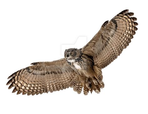 flying owl clipart flying owl on a transparent background by prussiaart on
