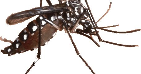 gejala dan ciri ciri demam berdarah dengue dak bahaya