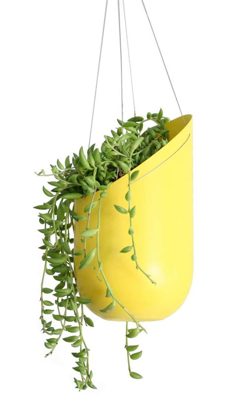 outdoor hanging planter best fun office plants images on