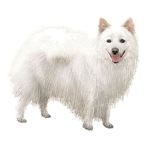 pomeranian japanese spitz mix japanese spitz pomeranian cross breed picture breeds picture