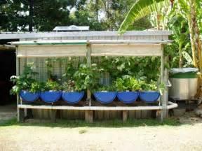 backyard aquaponics australia aquaponics in cooroy queensland murray hallam s