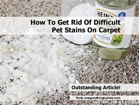 how hard is it to get rid of bed bugs how to get rid of difficult pet stains on carpet