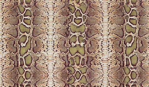 Snake Print snake print new hd wallpaper