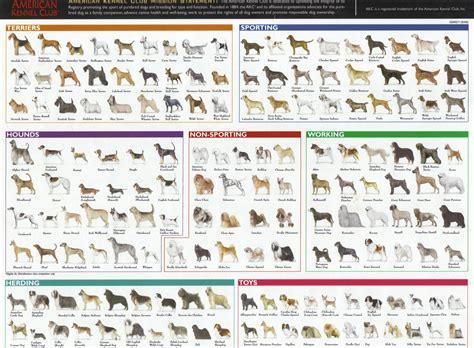 dogs bioventures
