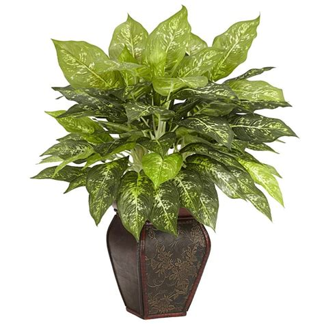 home decorative plants dieffenbachia with decorative vase polyester plant free