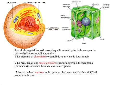 cassius a scuola a casa 2 compiti per casa 5 e cellula animale vs cellula vegetale
