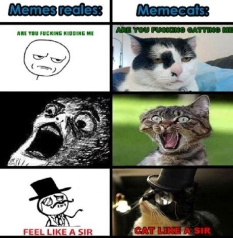 Meme Con - anticachamel memes de gatos