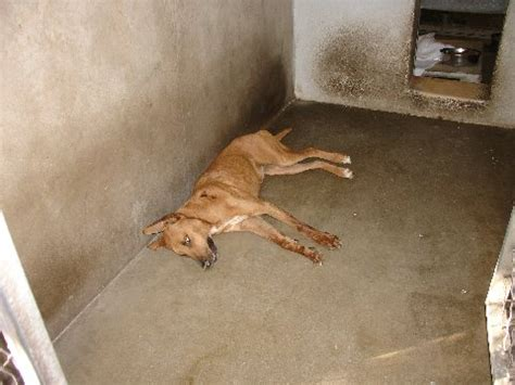 carson shelter dogs die due to cold at carson california animal shelter
