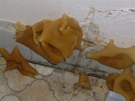 Mushrooms Growing In Bathroom D Plaster Protectahome Specialist D Proofing