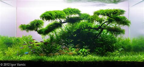 2012 aga aquascaping contest entry 82
