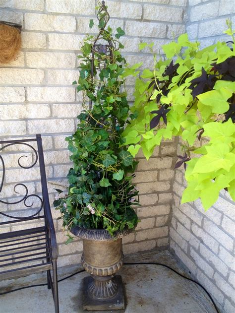 how to make your own topiary frames 1000 images about topiary on maidenhair fern