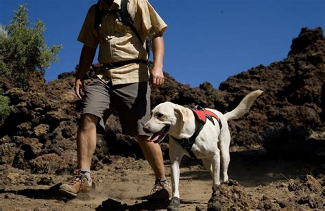 best hiking dogs 5 tips for hiking with your cat and other pet friendly travel articles