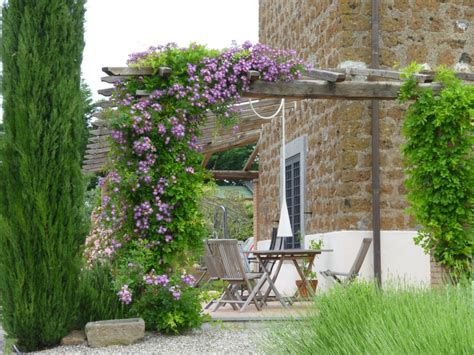 pergola or trellis 19 best pergola plants climbing plants for pergolas and arbors balcony garden web