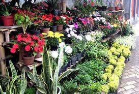 Jual Pot Anggrek Jogja cara melakukan pemasaran bunga pot tanamanku net
