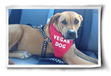 vegan dogs vegan dogs and cats great resources