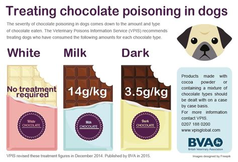 chocolate toxicity health vet in yate bristol abbotswood veterinary centre