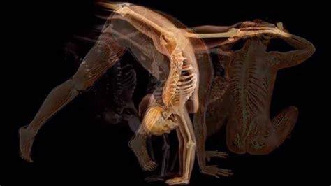 imagenes en 3d del cuerpo humano el cuerpo humano youtube
