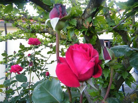 maggio in fiore appennino terra di frontiera maggio in fiore