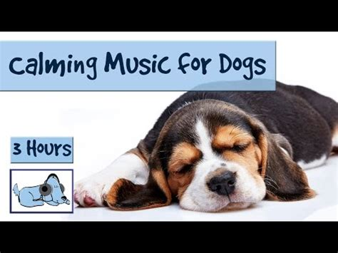 soothing sounds for dogs 3 and a half hours of calming for dogs